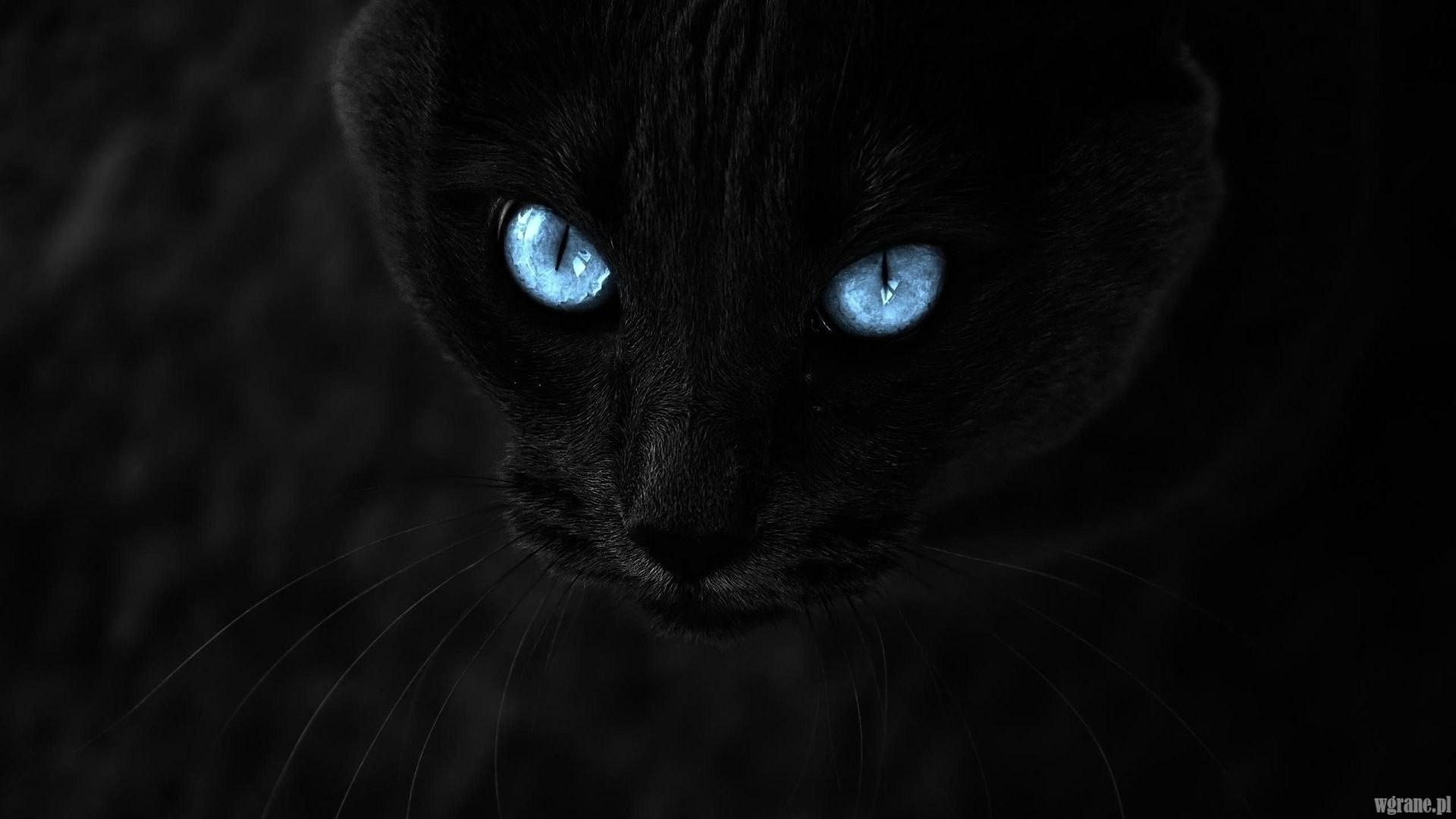 Tapety Na Pulpit Czarny Kot Wgranepl